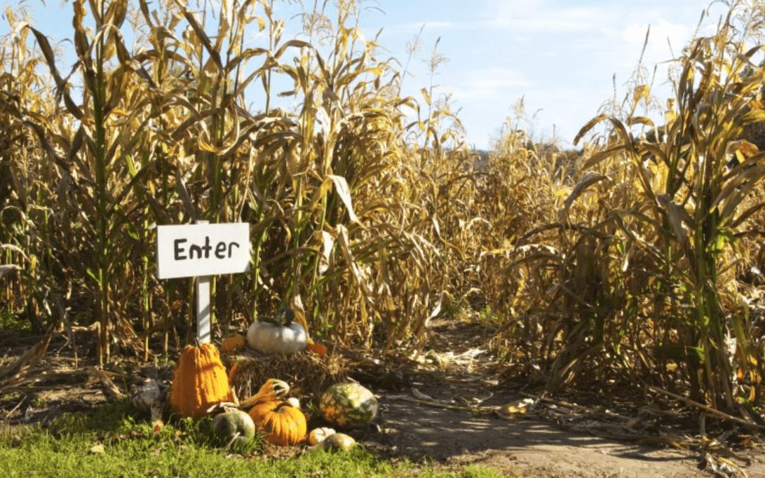 Corn Mazes & Pumpkin Patches Around Homes in Littleton