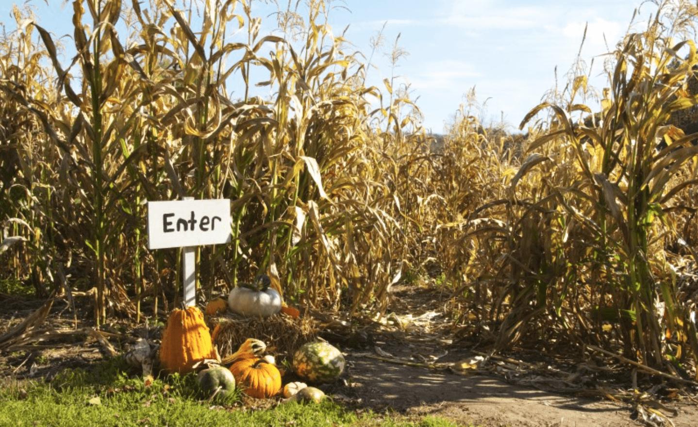 Littleton Corn Mazes & Pumpkin Patches
