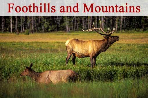 Mountain & Foothills